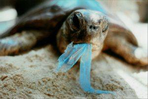 La plastica in fondo al mare