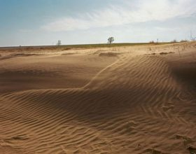 Oltre il 75% del suolo a livello mondiale risulta degradato.