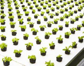 BOWERY FARMING e le coltivazioni indoor
