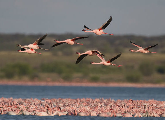 ♥♥♥ Gli uccelli migratori hanno qualcosa da insegnarci ♥♥♥