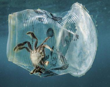 Ministero dell'Ambiente e Corepla insieme contro la plastica in mare.