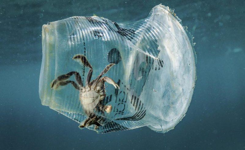 intrappolato nella plastica
