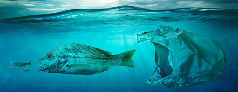 le leggi del mare